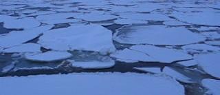 Pancake ice Bering Sea 2007